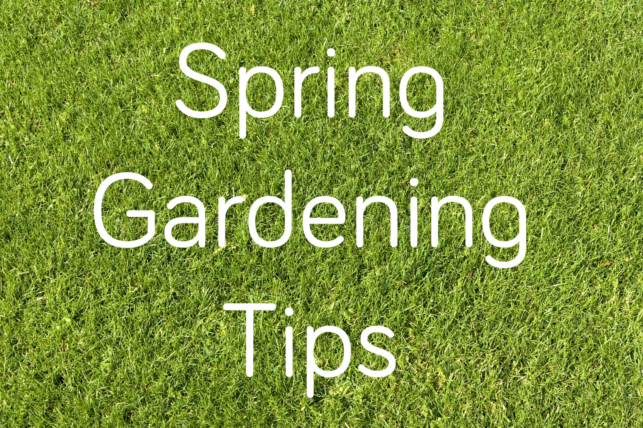 Spring gardening tips livinghouse blog for Gardening advice