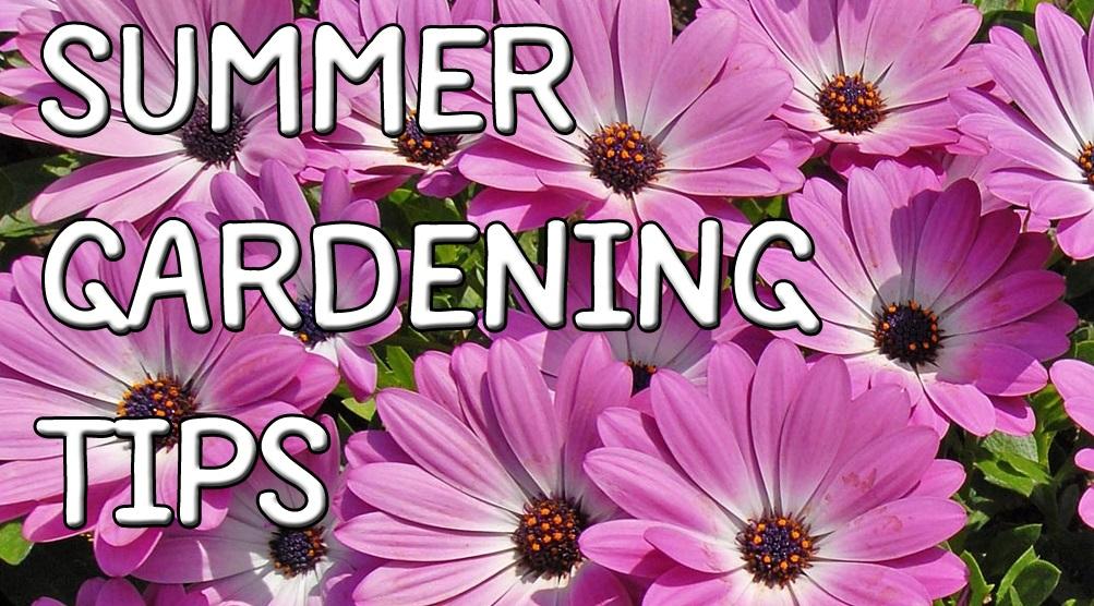 Summer gardening tips - livinghouse.co.uk