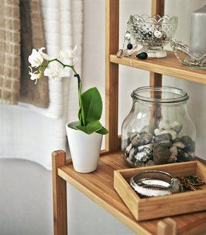 bathroom-pot-plant
