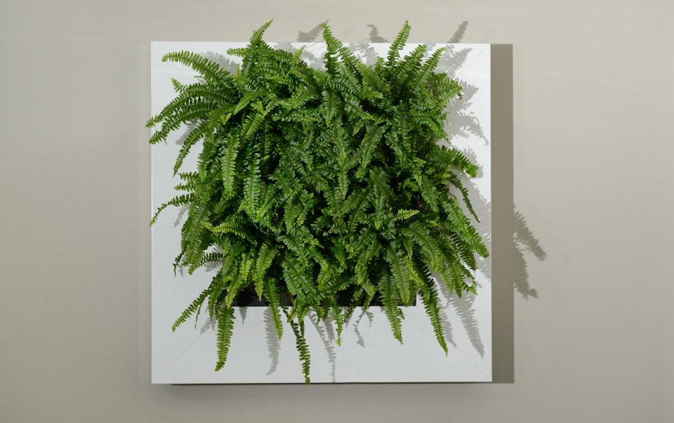 framed-indoor-plant