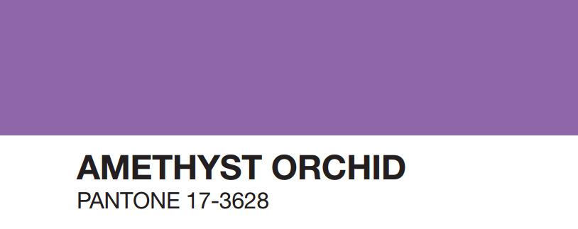 amethyst-orchid