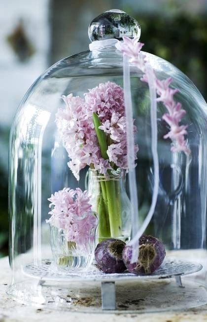 hyacinth-cloche