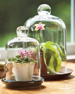 orchid-cloche
